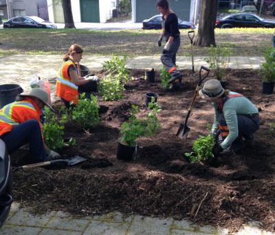 Les employées de la Ville plantent de nouveaux arbustes